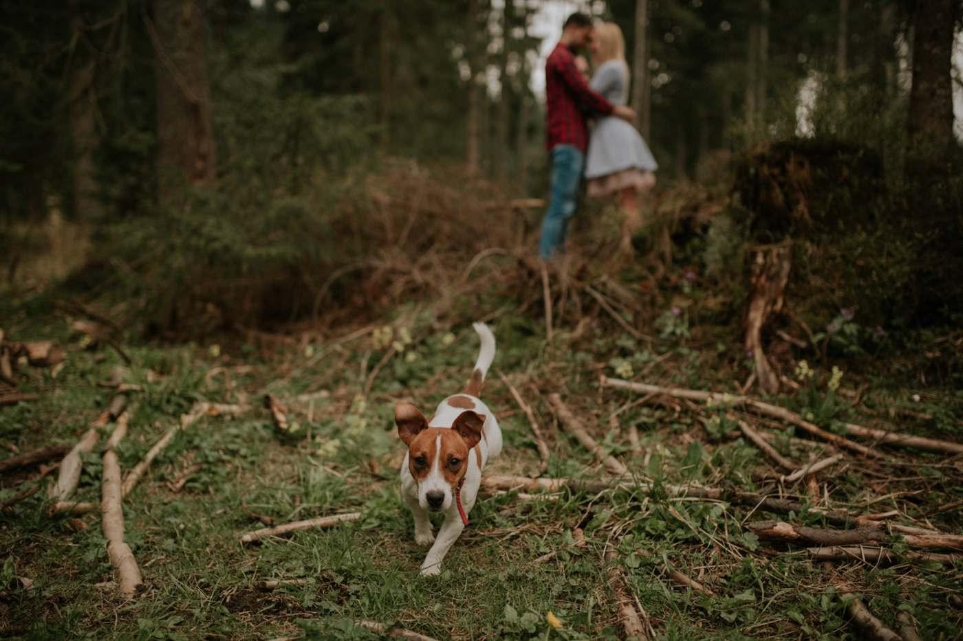 lesna sesja narzeczenska z psem, sesja z psem, sesja narzeczenska z psem, lesna sesja narzeczenska, sesja narzeczenska, sesja narzeczenska w gorach, sesja narzeczenska w tatrach, fotograf slubny, zdjecia slubne, plener slubny