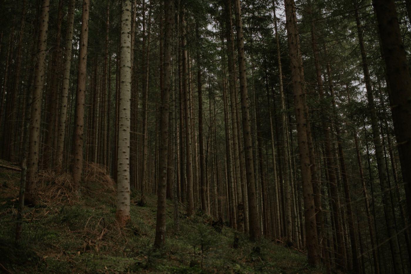 Leśna sesja narzeczeńska z psem 19