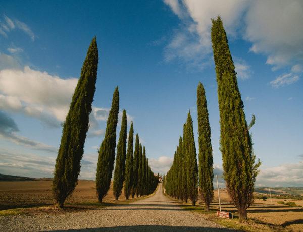 fotografia slubna, zdjecia slubne, podroze, toskania, siena, pienza, plener slubny w toskanii